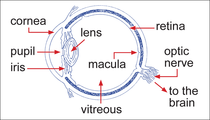 An image showing the structure of the eye