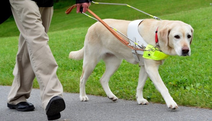 Person walking with their guide dog
