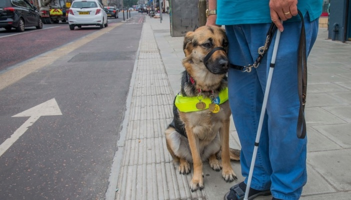 Image shows a guide dog resting against its owners leg, the man is holding a white cane standing at the side of the road
