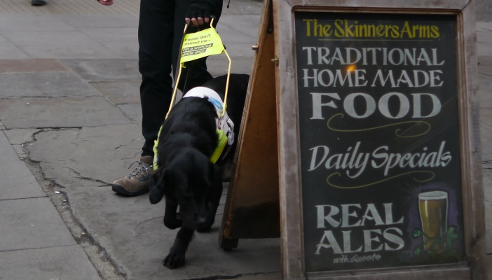 Photo of a guide dog walking around an a-board