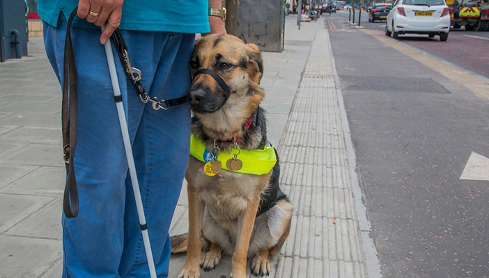 Man with white cane and guide dog
