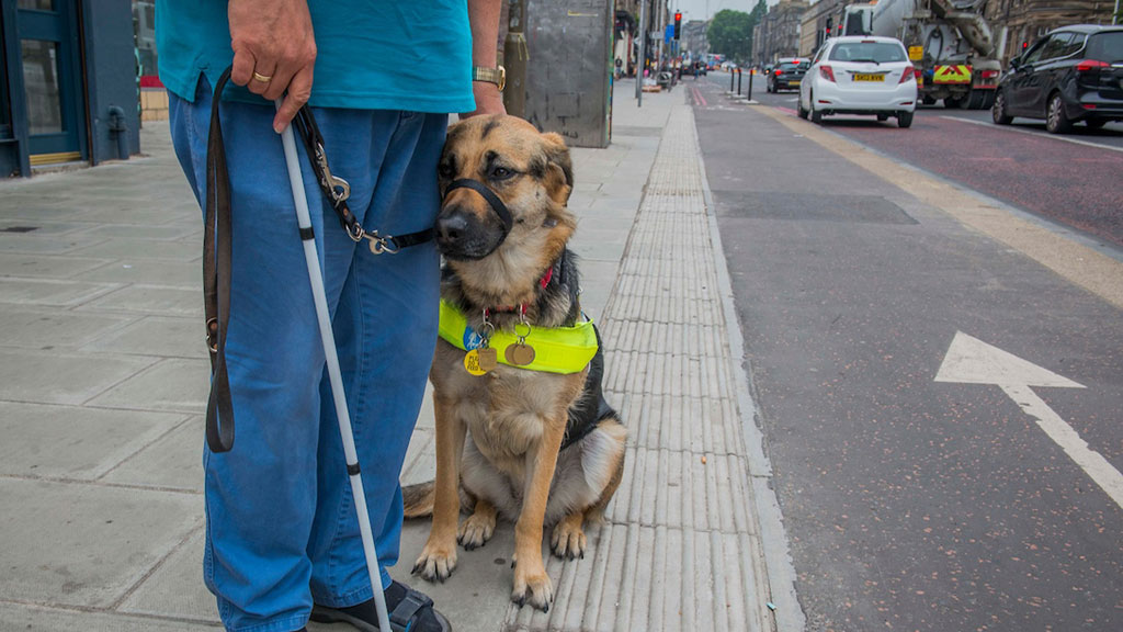 Bottom half a man holding a white cane with a guide dog at a street crossing