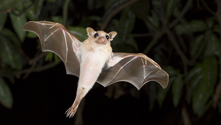 Photo of a bat